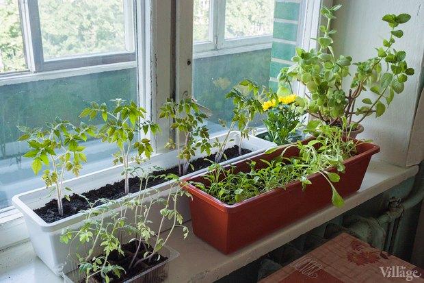 Сделай сад: Что киевляне выращивают у себя на балконах. Зображення № 29.