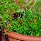 Сделай сад: Что киевляне выращивают у себя на балконах. Зображення № 25.