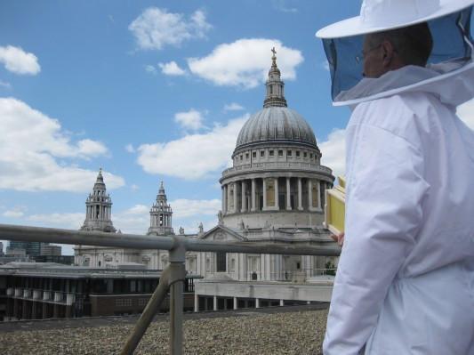 Как у них: «Городские пчёлы» в Лондоне. Изображение № 18.