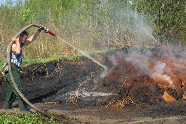 «2010 год может повториться» — Greenpeace о пожарах вПодмосковье. Изображение № 2.