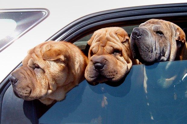 Итоги недели: Налог на собак, ночные экскурсии в метро и запуск Александринки-2. Изображение № 1.