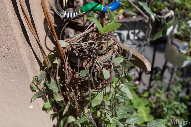 Где посадки: Что горожане выращивают на балконах иподоконниках. Изображение № 43.