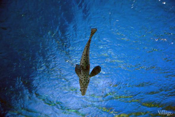 Первый океанариум открылся в Москве. Изображение № 9.