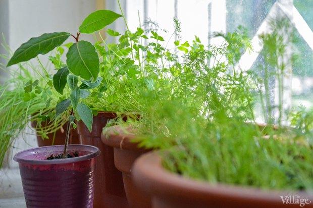 Сделай сад: Что киевляне выращивают у себя на балконах. Зображення № 23.