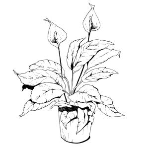 Гид The Village: Комнатные растения. Изображение № 37.