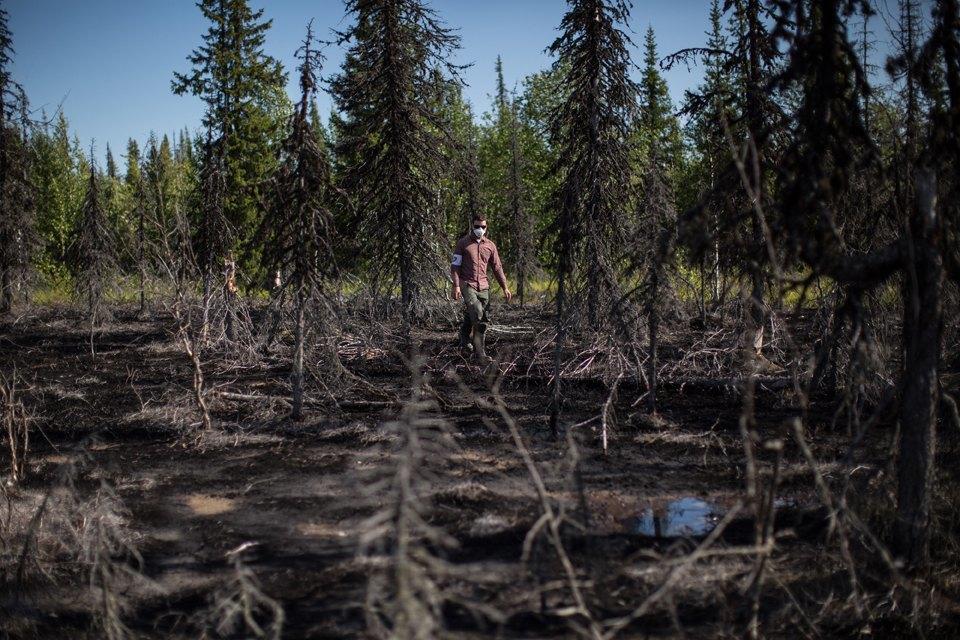 Как леса Коми очищают от нефти. Изображение № 31.