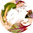 Omnivore Food Festival: Иван Березуцкий готовит суп из черноплодной рябины и нутрию в бересте. Изображение № 23.