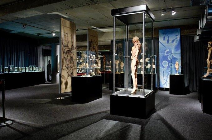 На Конюшенной площади покажут анатомию человека. Изображение № 1.