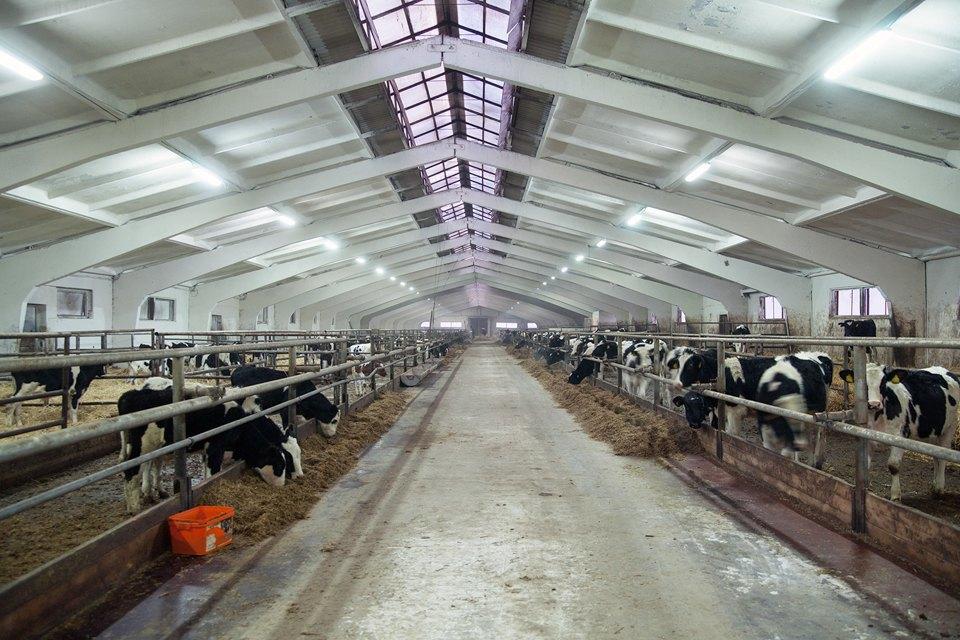 Как делают молочные продукты. Изображение № 1.