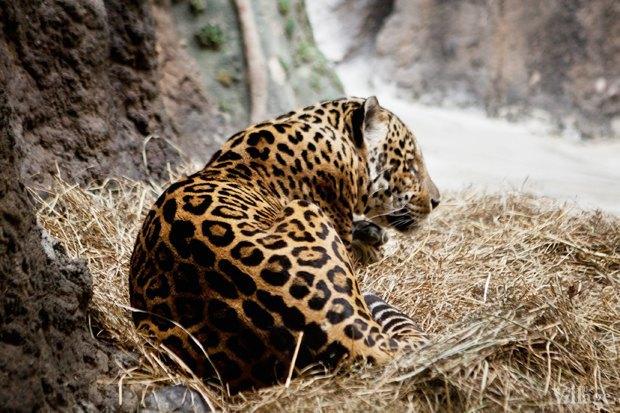 Директор московского зоопарка: «Погода была ужасной, всё выглядело очень грустно». Изображение № 8.