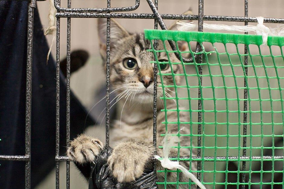 Коты иты: Как помочь брошенным животным. Изображение № 6.