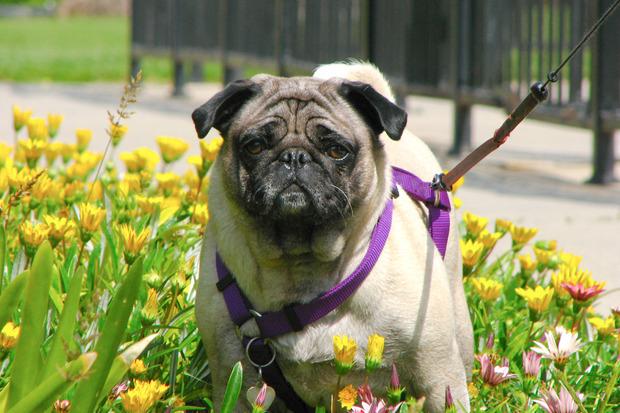 Иностранный опыт: Что делать сбездомными собаками. Изображение №24.