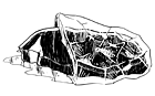 Части тела: Из чего сделаны стейки в ресторанах. Изображение №5.