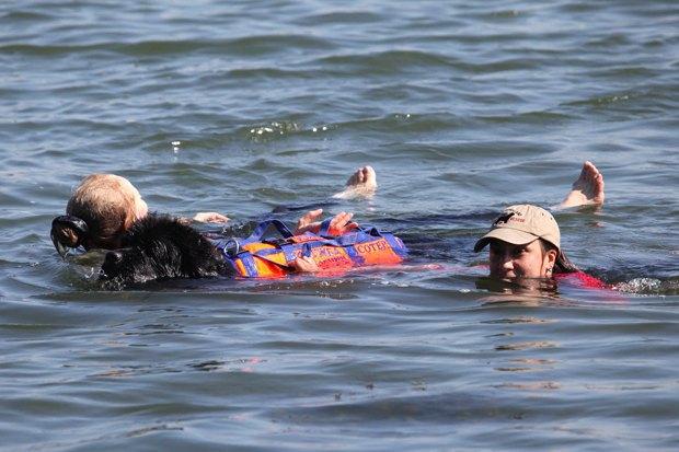 Московские пляжи будут патрулировать собаки-спасатели. Изображение № 2.