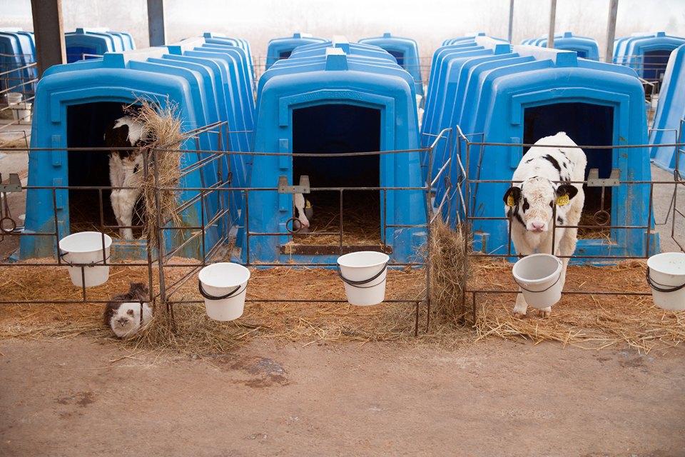 Как делают молочные продукты. Изображение № 7.