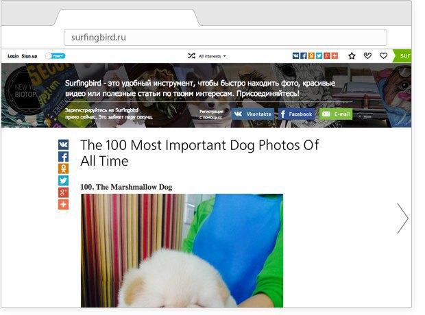 Сто фотографий собак, лучшая реклама порносайта и виды аэропортов с высоты птичьего полёта. Изображение № 5.