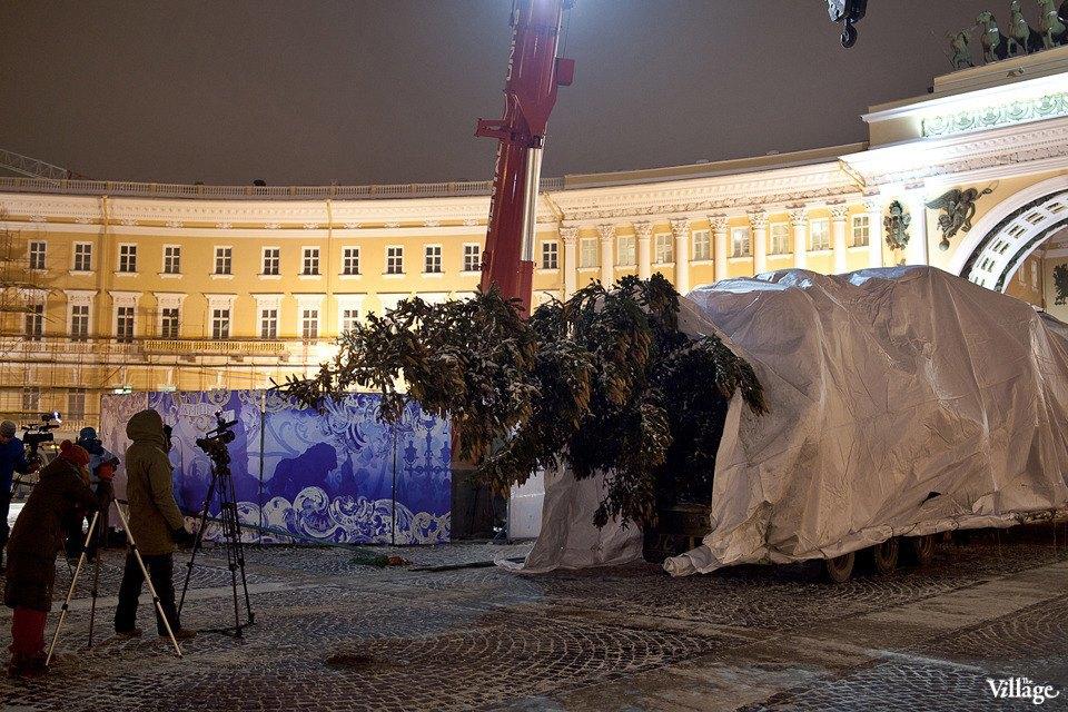Фоторепортаж: Как устанавливали главную петербургскую ёлку. Изображение № 9.