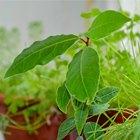 Сделай сад: Что киевляне выращивают у себя на балконах. Зображення № 26.