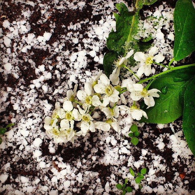 Майский снегопад вснимках Instagram. Изображение № 13.