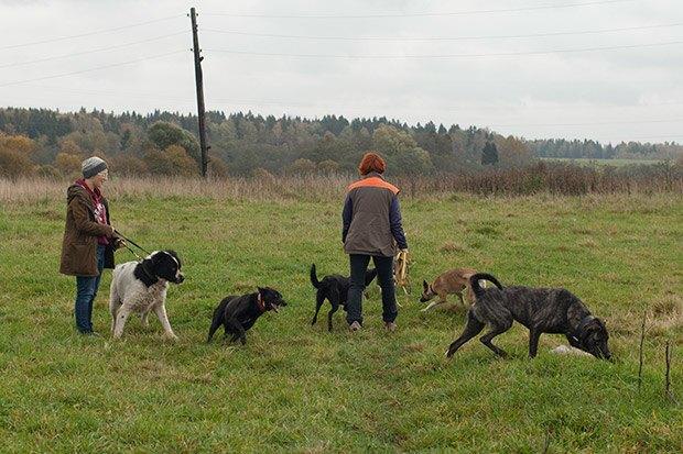 О чем следует знать, прежде чем заводить собаку. Изображение № 24.