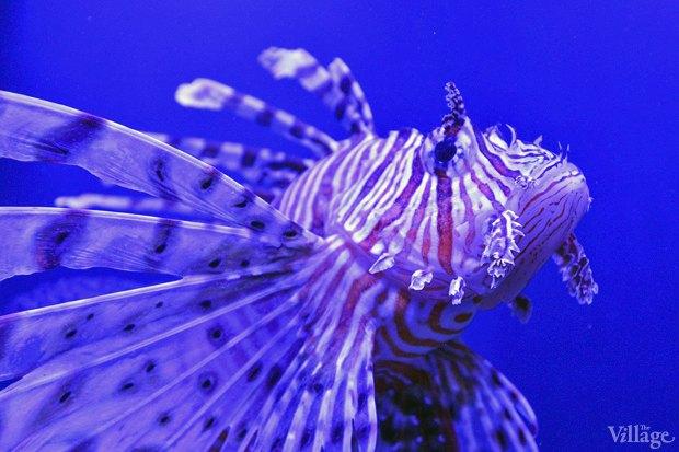В «Детском мире» начал работать океанариум. Зображення № 11.
