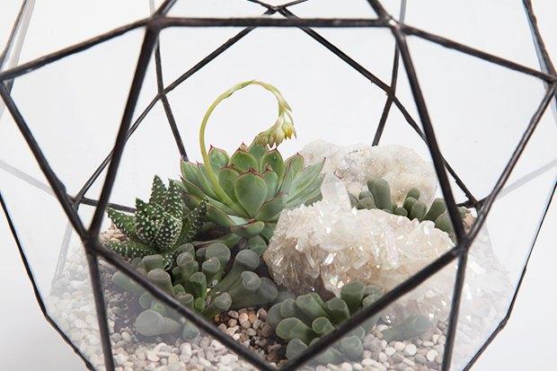 Террариумы скомнатными растениями Blossom Universe. Изображение № 6.