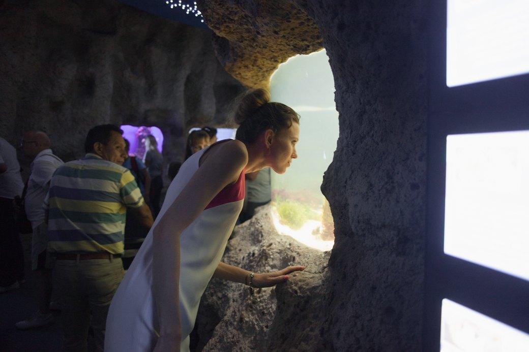 «Главные здесь — косатки, но самые милые — моржи»: На ВДНХ открылся океанариум. Изображение № 10.