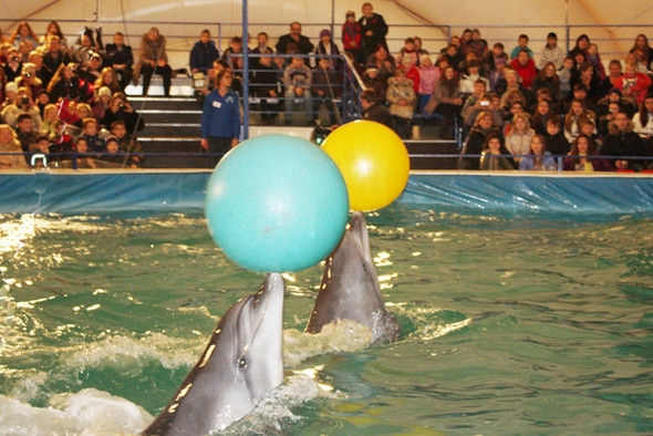 На ВВЦ открылся дельфинарий. Изображение № 7.