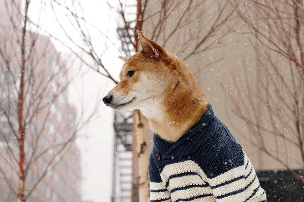 Сколько зарабатывают собаки икошки из интернета. Изображение № 1.