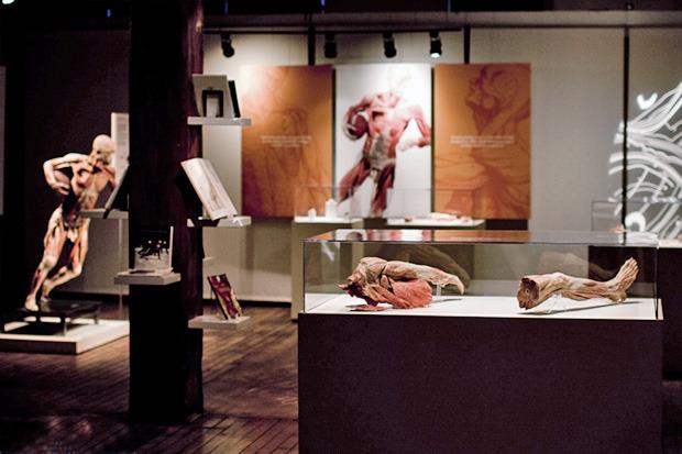Спустили шкуру: В Киев привезут The Human Body Exhibition. Зображення № 1.