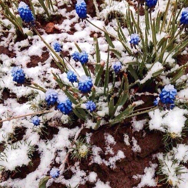 Майский снегопад вснимках Instagram. Изображение № 3.