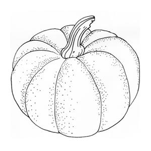Сезон молодых овощей: Тыква. Изображение №1.