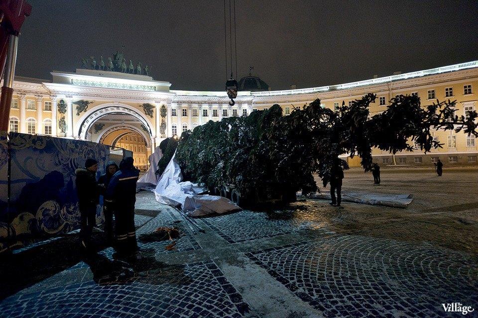 Фоторепортаж: Как устанавливали главную петербургскую ёлку. Изображение № 15.