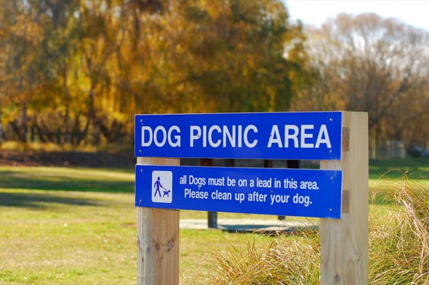 Иностранный опыт: Как устроены площадки для выгула собак в 5 городах мира. Изображение № 22.