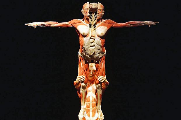 Спустили шкуру: В Киев привезут The Human Body Exhibition. Зображення № 7.