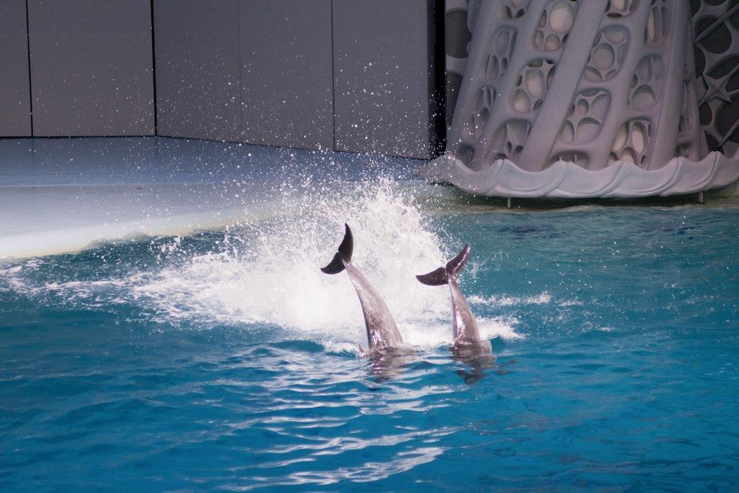 «Главные здесь — косатки, но самые милые — моржи»: На ВДНХ открылся океанариум. Изображение № 17.