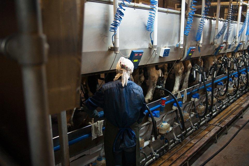 Как делают молочные продукты. Изображение № 5.