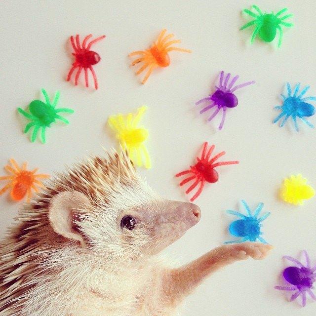 Лучшие страницы Instagram с животными: Часть 1. Изображение № 5.