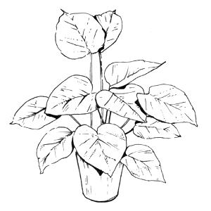 Гид The Village: Комнатные растения. Изображение № 39.