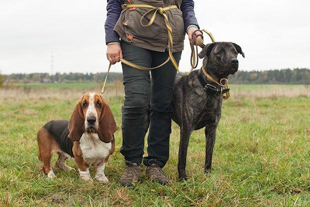 О чем следует знать, прежде чем заводить собаку. Изображение № 28.