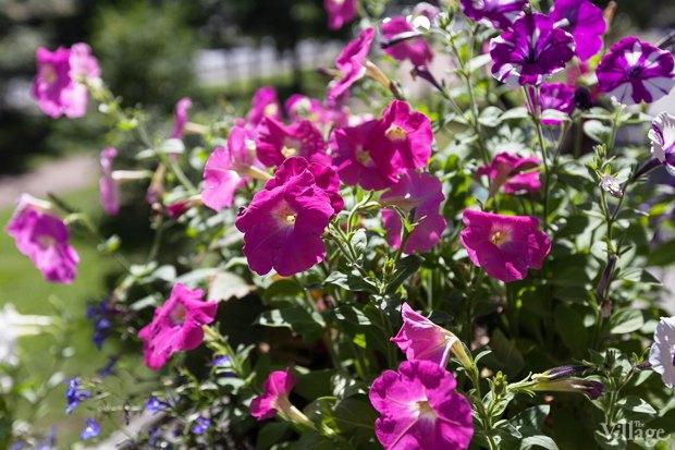 Где посадки: Что горожане выращивают на балконах иподоконниках. Изображение № 35.