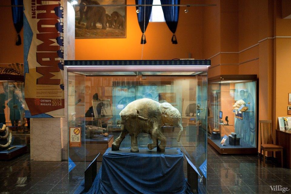 Перемены в Дарвиновском музее: «Можно бегать, прыгать и шуметь». Изображение № 11.