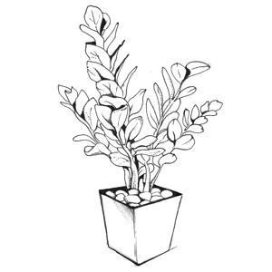Гид The Village: Комнатные растения. Изображение № 34.