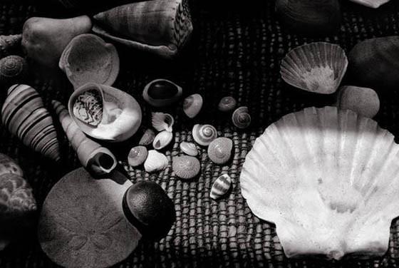 Коллекция раковин Сьюзан Зонтаг. Изображение № 10.