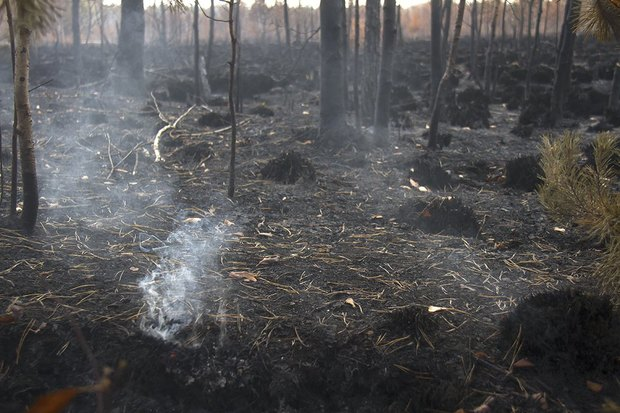 Greenpeace опричинах октябрьского смога вМоскве. Изображение № 1.
