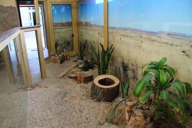 В Ленинградском зоопарке клетки заменяют стеклянными вольерами. Изображение № 2.