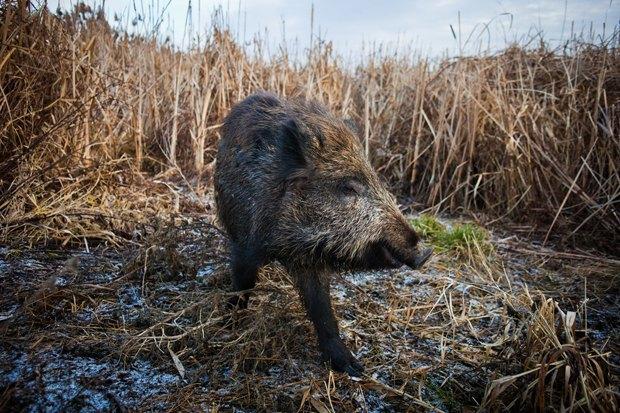 Фото: Shutterstock.com. Изображение № 1.