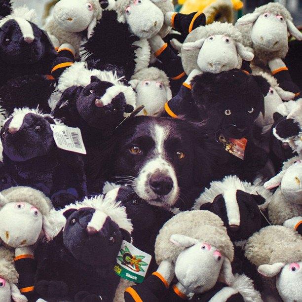 Лучшие страницы Instagram с животными: Часть 2. Изображение № 13.