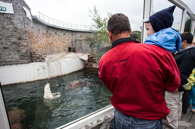 Как живёт и меняется Ленинградский зоопарк . Изображение № 31.