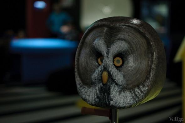 Симуляторы зрения животных. Изображение № 19.